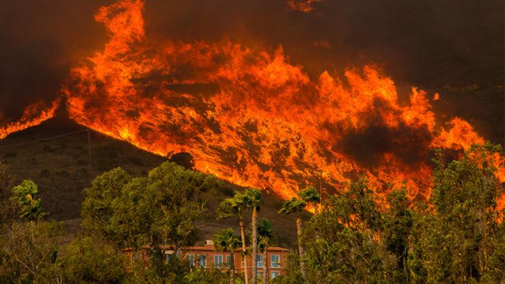 カリフォルニア大火災の原因は何か?環境保護主義者の責任だと発言する ...